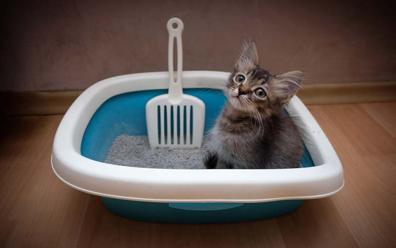 Sifting Litter Box review