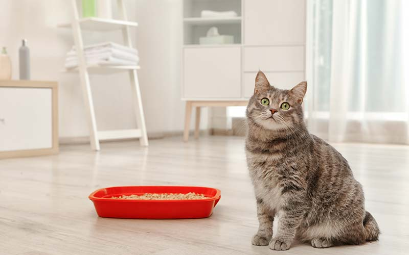Best Wood Pellets For Cat Litter